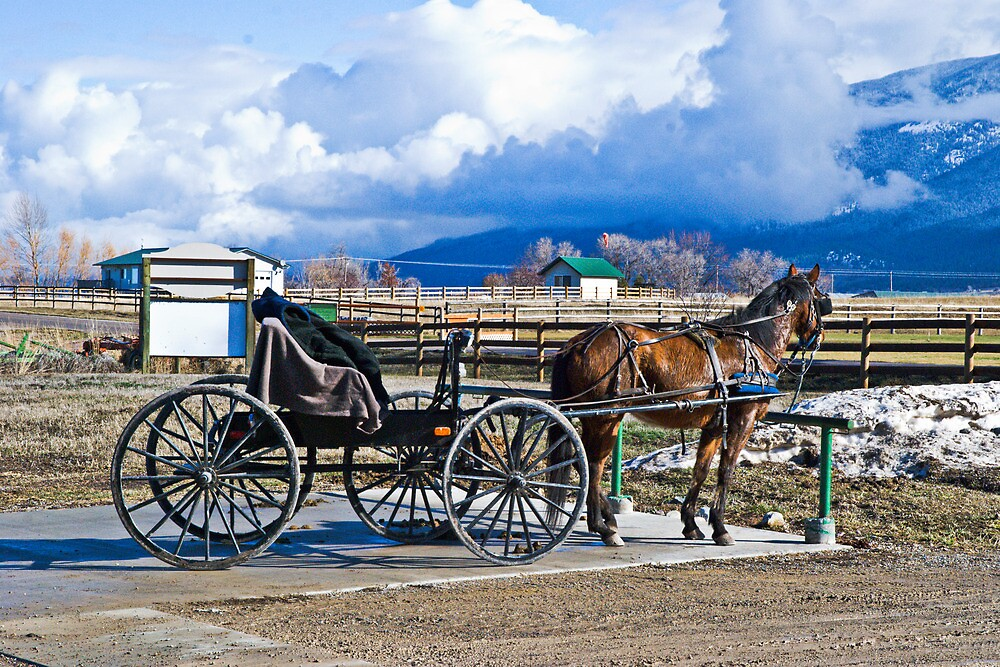 Montana Amish by Bryan D. Spellman