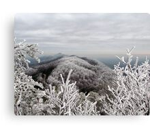 Rime Ice in the Smoky Mountains Canvas Print