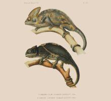 Chameleon Scientific Illustration by nekhebit