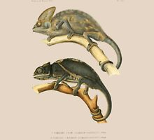 Chameleon Scientific Illustration Unisex T-Shirt