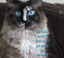 Go easy . . . by Liesl Gaesser