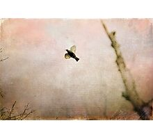 """Flight of Grace"" Photographic Print"