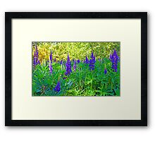 Blue Lupin in the Springtime Framed Print