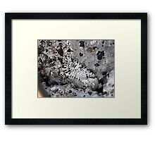 ©NS Mimetic IAT Framed Print