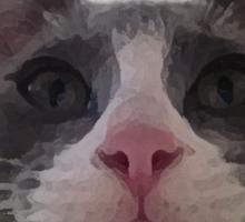 Gracie Kitty Sticker