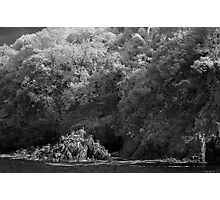 untitled - pelicans on banderas bay Photographic Print