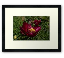 Passion For Red Framed Print