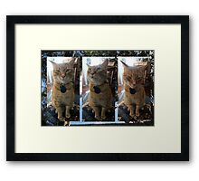 O.K.! O.K.! So only I could love him!  Framed Print