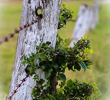The Old Fencepost by Keith G. Hawley