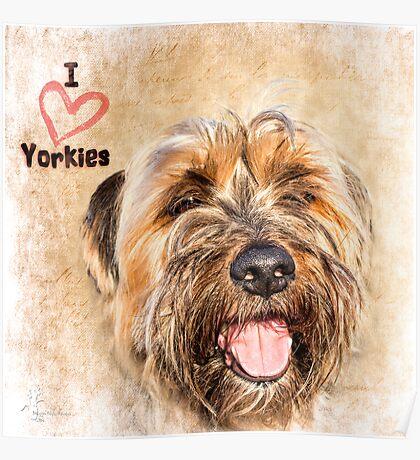 Sam the Yorkie Poster