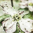 Dogwood by Jessica Manelis
