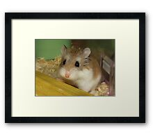 Cheese; 9th November 2011 - 16th March 2014 Framed Print