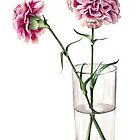Carnations in a Glass by Debbie Jew