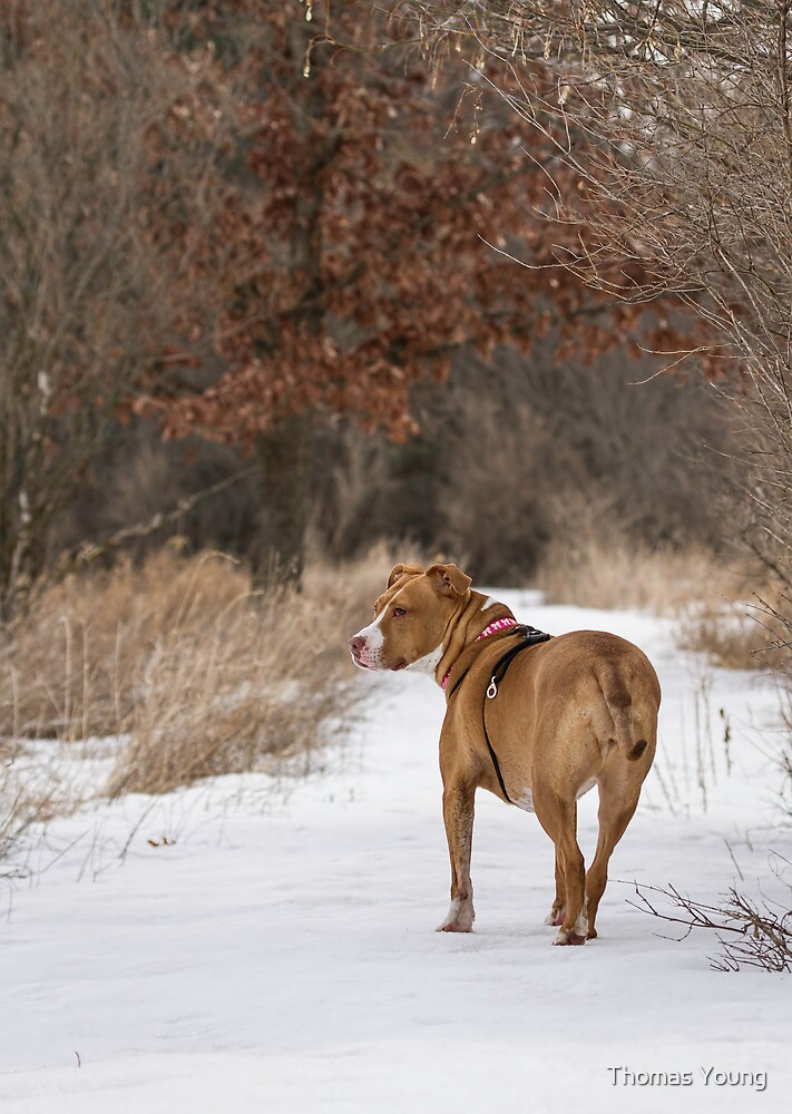 Shelby On The Trail by Thomas Young