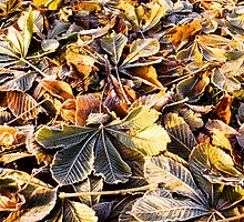 Fallen Leaves on Frosty Morning by Kawka