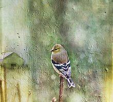 """""""A Birds Dream"""" by Cheryl Tarrant"""