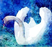 SWAN by Tammera