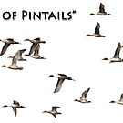 Flock Of Pintails by Thomas Young