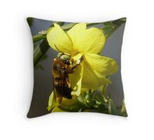 Bumble Bee ~Xylocopa micans - male Throw Pillow