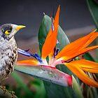 Bird in Paradise by Chris Brunton