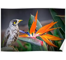 Bird in Paradise Poster