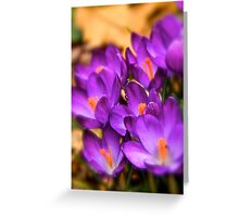 Art Of the Crocus 6 Greeting Card