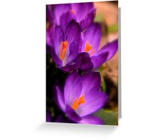 Art Of the Crocus 2 Greeting Card