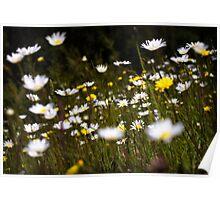 ~ Wildflowers ~ Poster