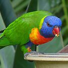 The Very, Very Colourful One by stevealder