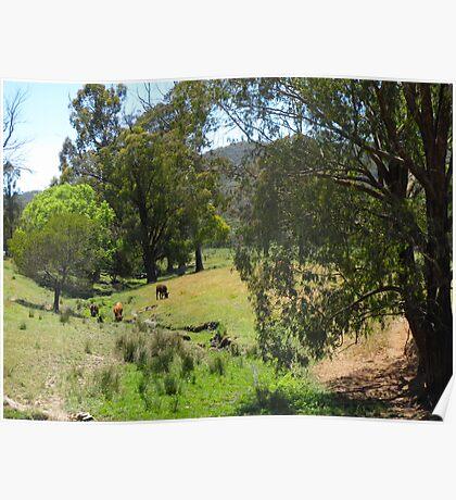 Australian Country Scene 4 Poster
