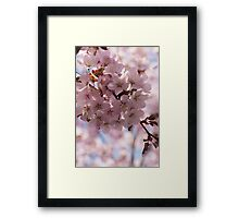 Pink Spring - Gently Pink Cherry Blossoms Framed Print