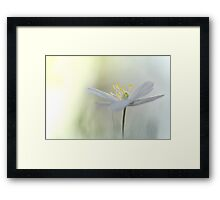 Irresistible Wood Anemone.... Framed Print