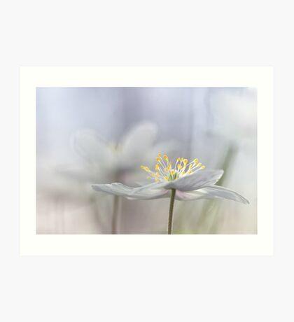 Addictive wood anemone.. Art Print