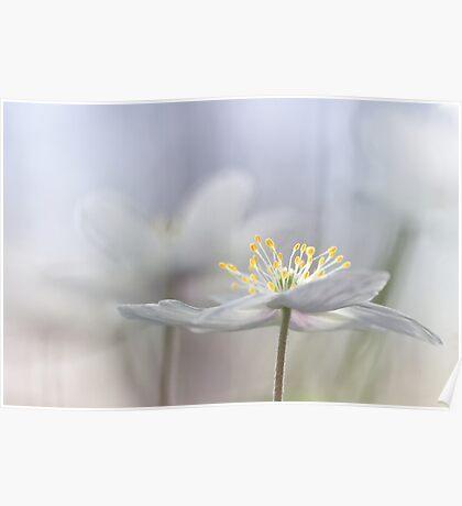 Addictive wood anemone.. Poster