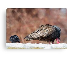 The Crow And Vulture Canvas Print