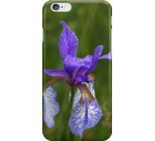 Iris sibirica, Sibirische Schwertlilie iPhone Case/Skin