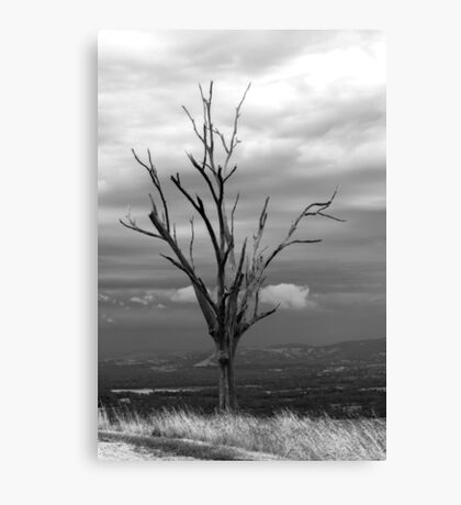Last Stand Tree Canvas Print