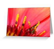 Pollen Details Greeting Card