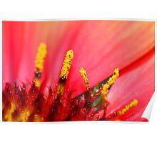 Pollen Details Poster