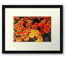 May Flower Festival-Tuscany Framed Print