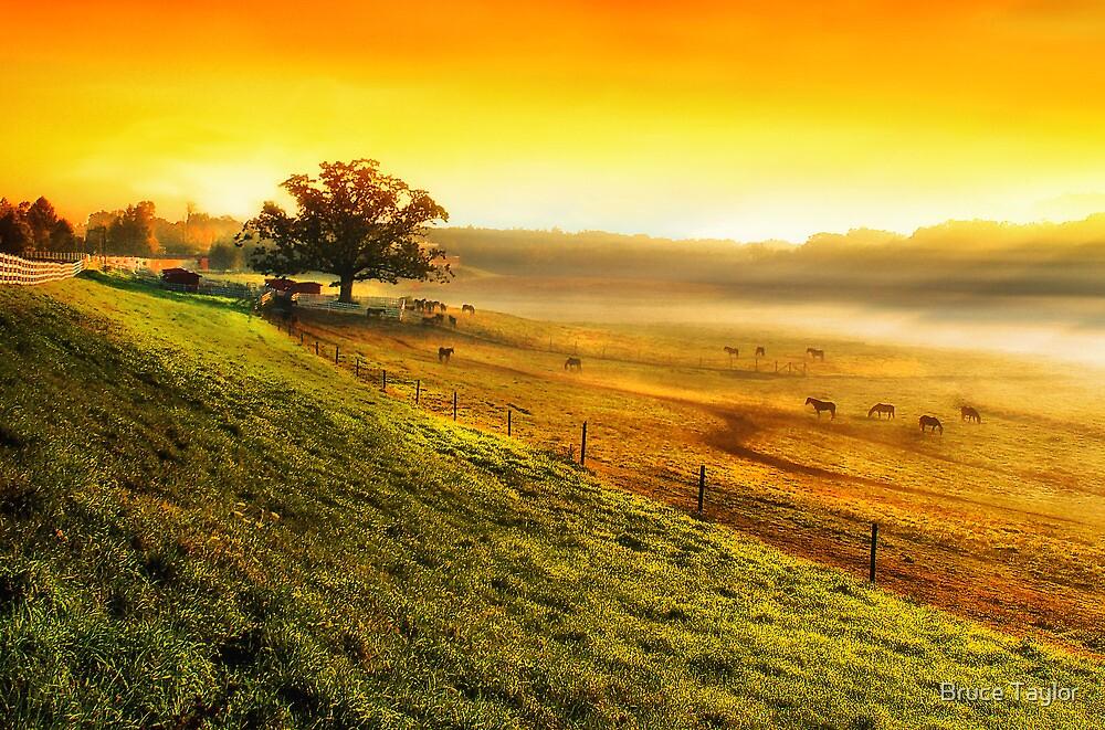 Hazy Summer Morning by Bruce Taylor