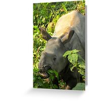 Baby Rhino Feast Greeting Card