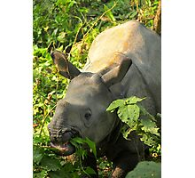 Baby Rhino Feast Photographic Print