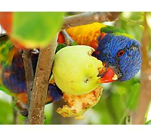 Fruit Thief Photographic Print