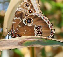 Butterfly by cindylu