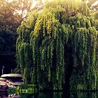 Weeping Willow by MadVonD