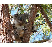 Koala Sleeping Photographic Print