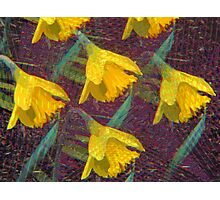 Kaleidoscopic Garden 3 Photographic Print
