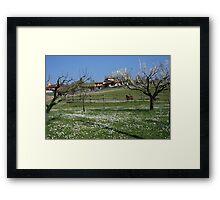 Tuscan landscape in spring time Framed Print