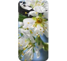 Prunus Blossom iPhone Case/Skin